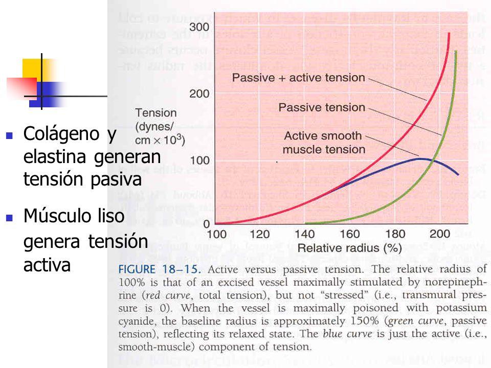Colágeno y elastina generan tensión pasiva
