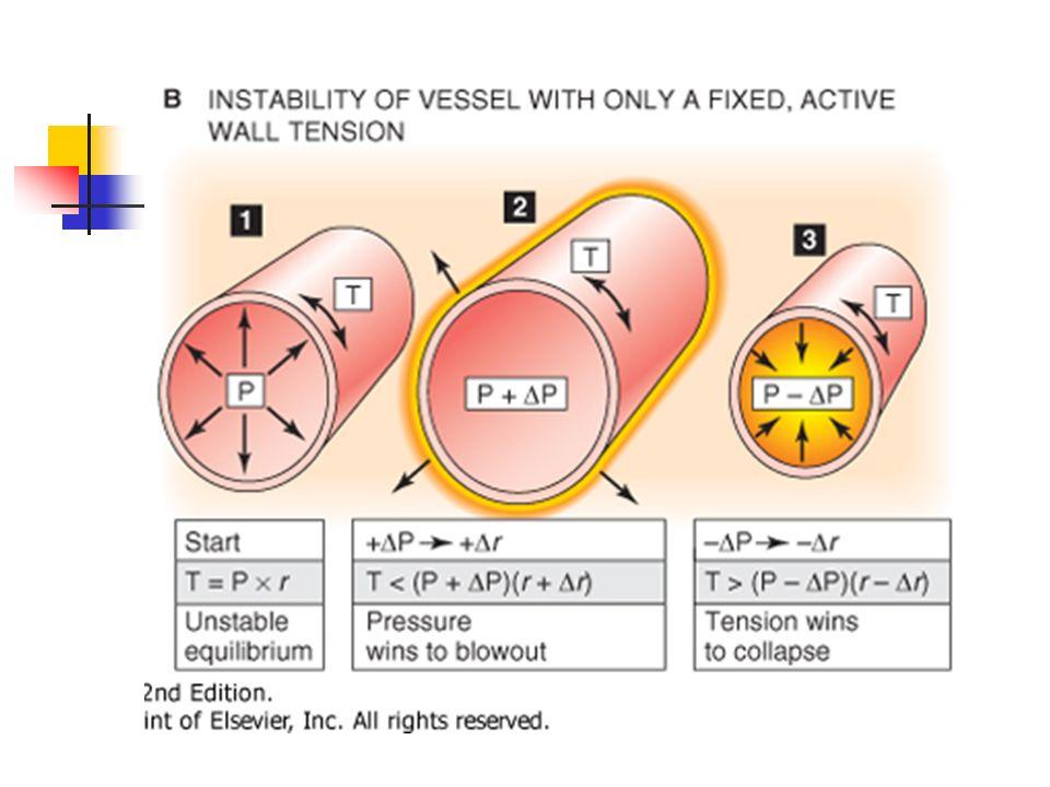 A Si musc. Liso solo contribuyen elementos elástico Si aumena P transmural auemtna r y aumenta T (A2) y puede ocurrir lo contrario (A3), siempre existe algo de elasticidad T no puede ∆T no puede ser 0
