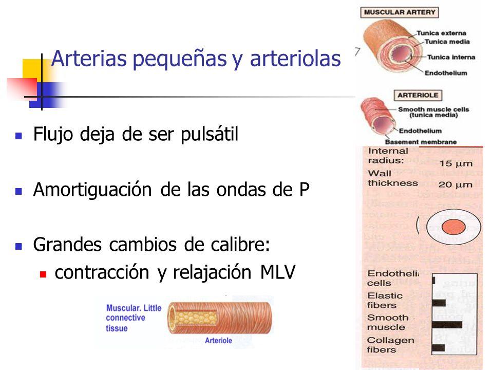 Arterias pequeñas y arteriolas