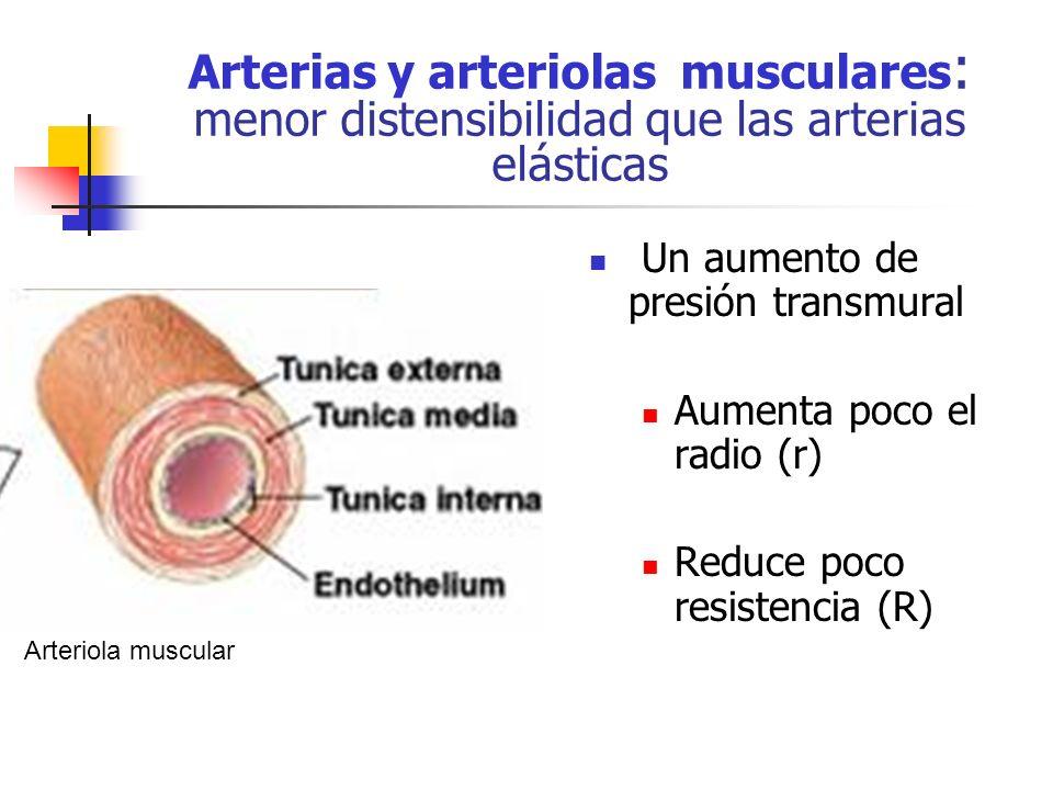 Arterias y arteriolas musculares: menor distensibilidad que las arterias elásticas