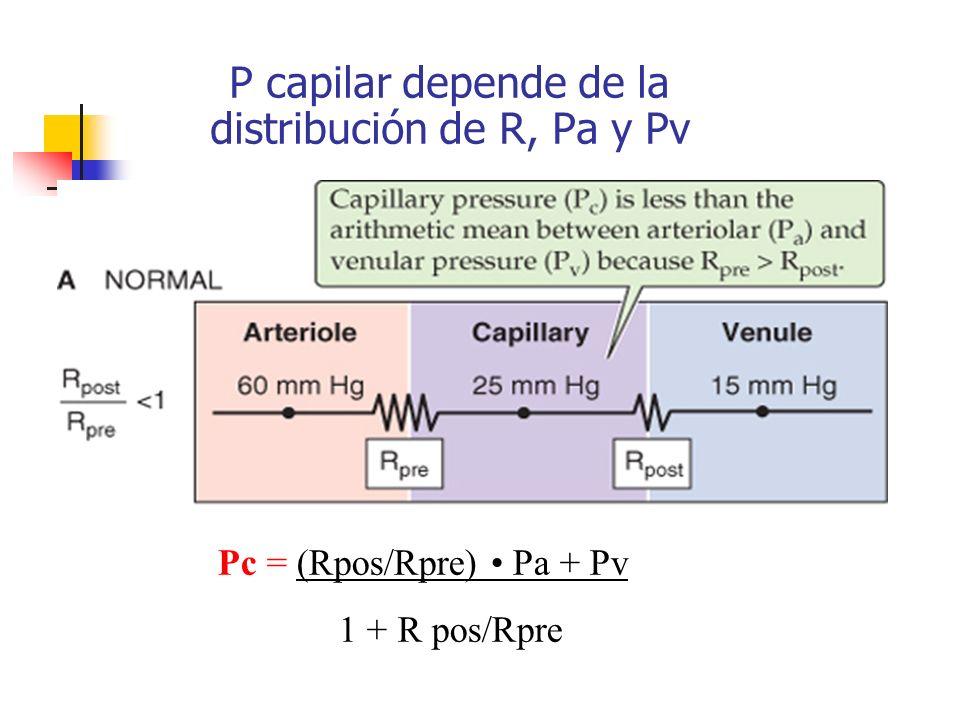 P capilar depende de la distribución de R, Pa y Pv