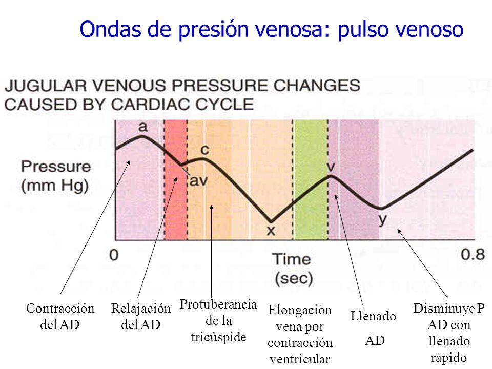 Ondas de presión venosa: pulso venoso