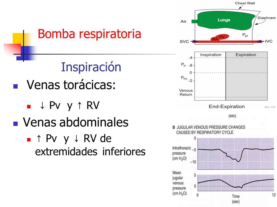 Bomba respiratoria Inspiración Venas torácicas: Venas abdominales