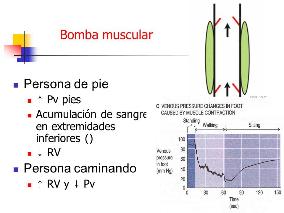 Bomba muscular Persona de pie Persona caminando ↑ Pv pies