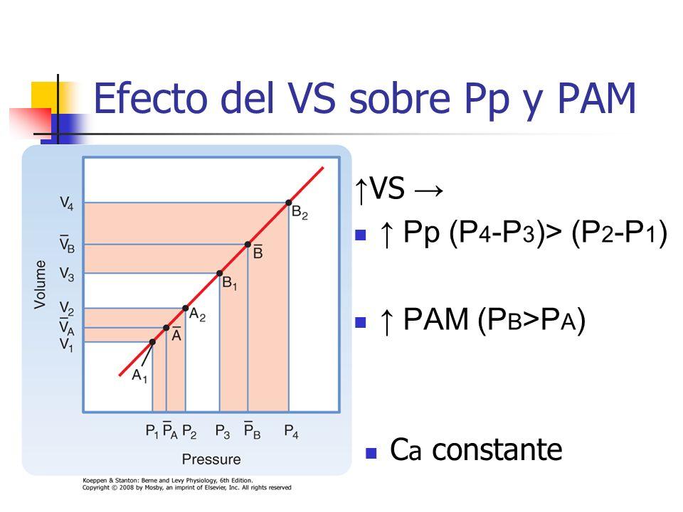 Efecto del VS sobre Pp y PAM