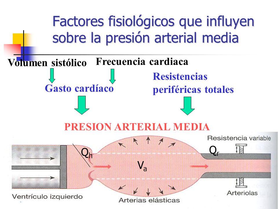 Factores fisiológicos que influyen sobre la presión arterial media