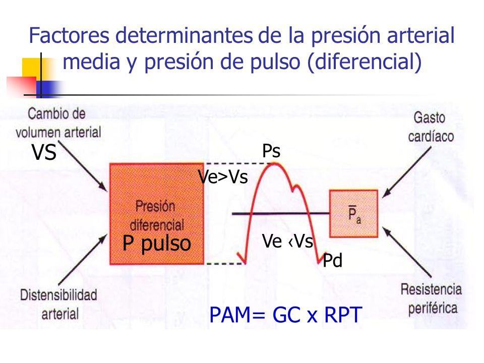 Factores determinantes de la presión arterial media y presión de pulso (diferencial)
