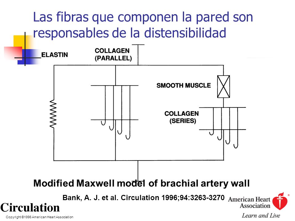 Modified Maxwell model of brachial artery wall