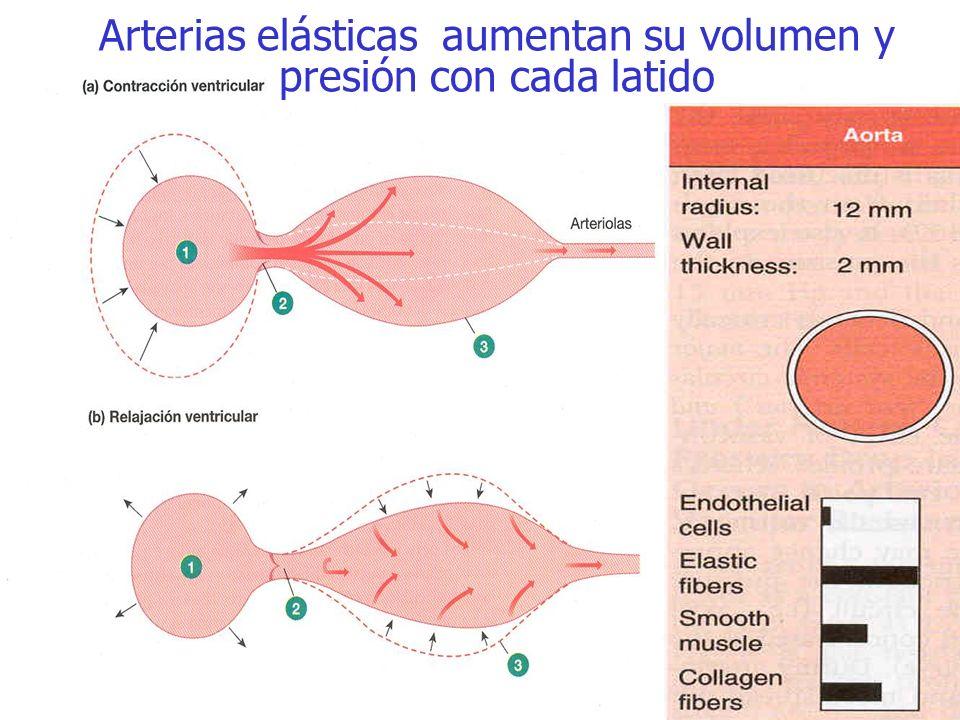 Arterias elásticas aumentan su volumen y presión con cada latido