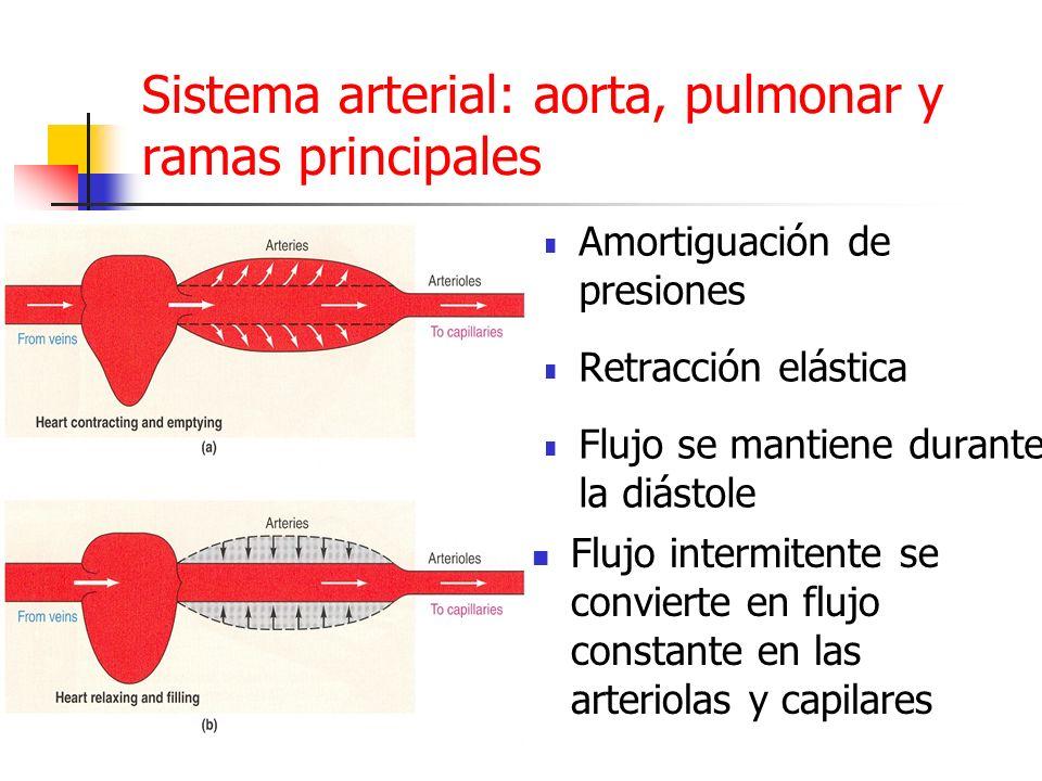 Sistema arterial: aorta, pulmonar y ramas principales