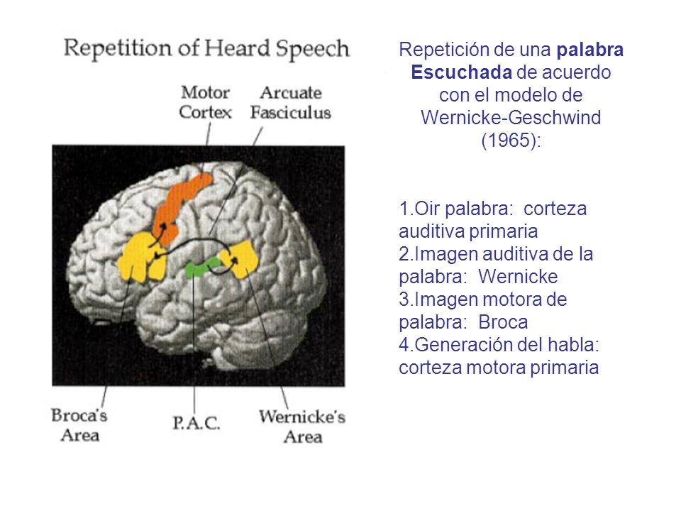 Repetición de una palabra Escuchada de acuerdo con el modelo de Wernicke-Geschwind (1965):