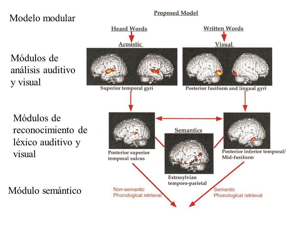 Modelo modularMódulos de análisis auditivo y visual. Módulos de reconocimiento de léxico auditivo y visual.