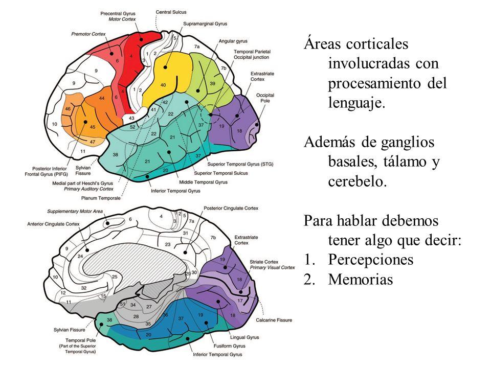 Áreas corticales involucradas con procesamiento del lenguaje.