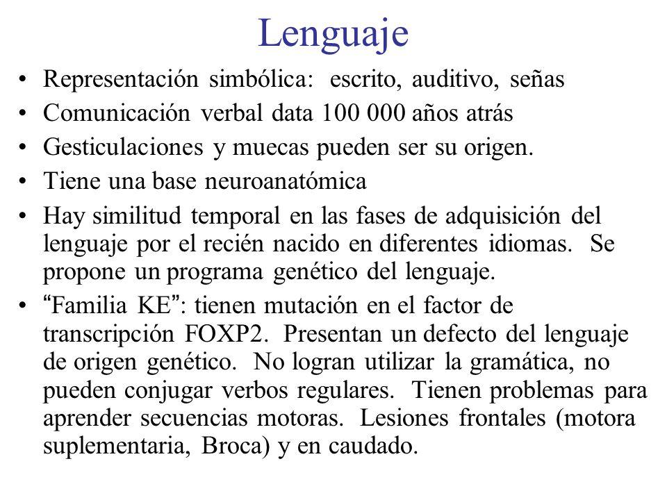 Lenguaje Representación simbólica: escrito, auditivo, señas