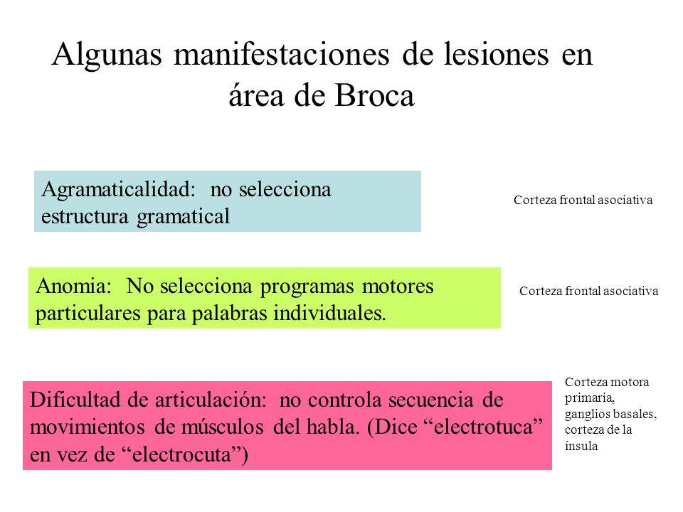 Algunas manifestaciones de lesiones en área de Broca