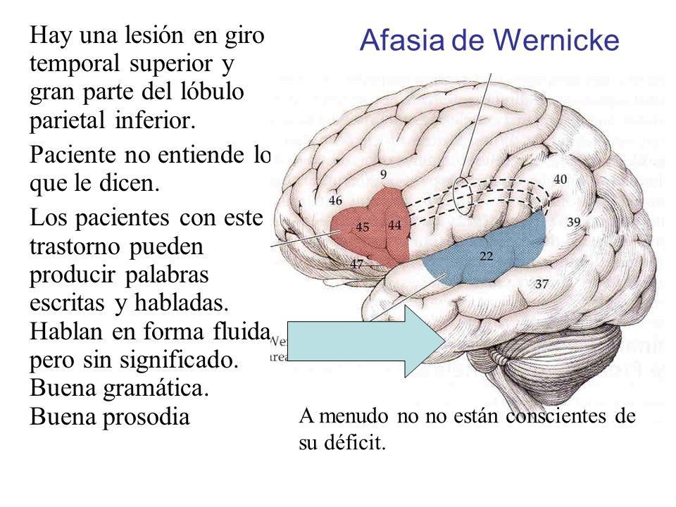 Afasia de Wernicke Hay una lesión en giro temporal superior y gran parte del lóbulo parietal inferior.