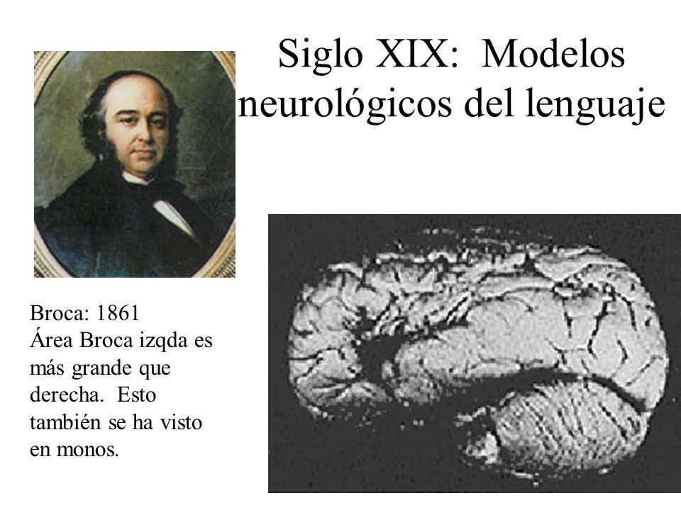 Siglo XIX: Modelos neurológicos del lenguaje