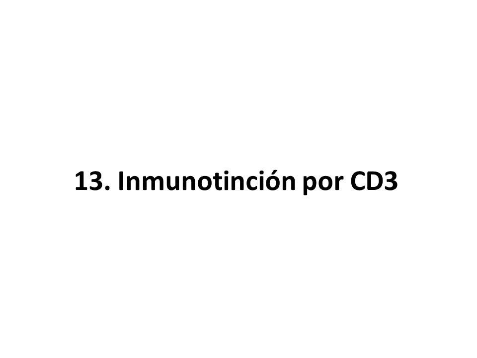 13. Inmunotinción por CD3
