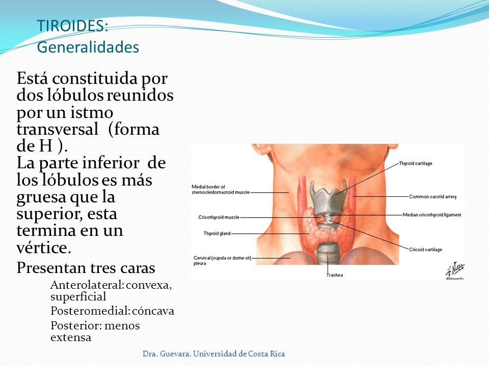 TIROIDES: Generalidades