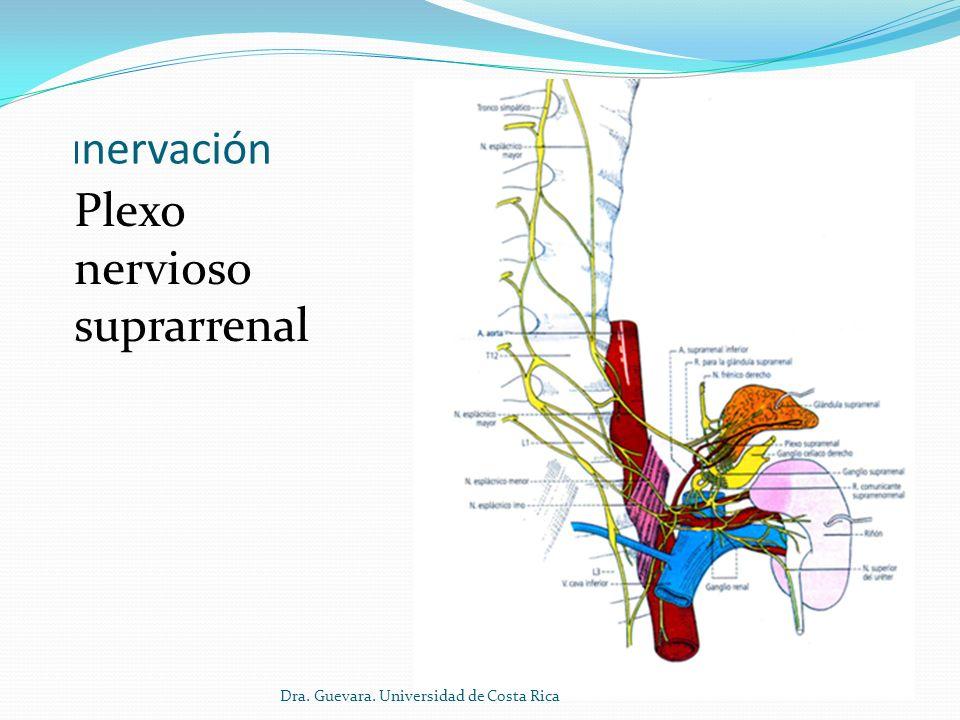 Plexo nervioso suprarrenal