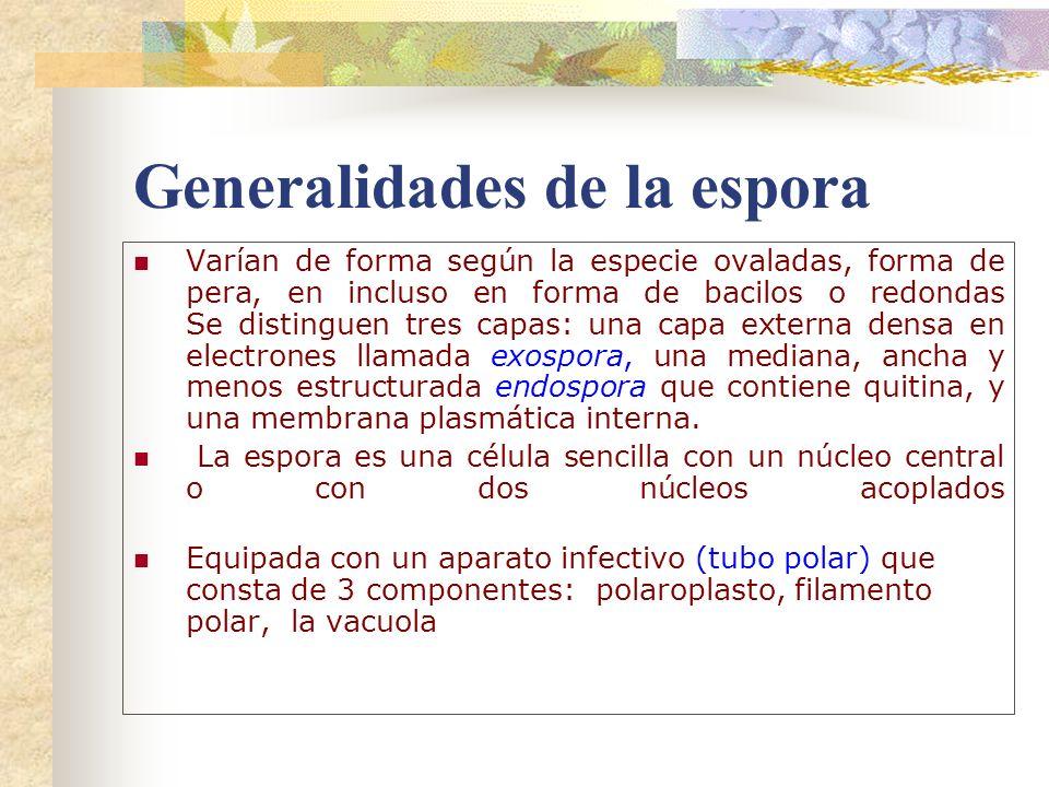 Generalidades de la espora