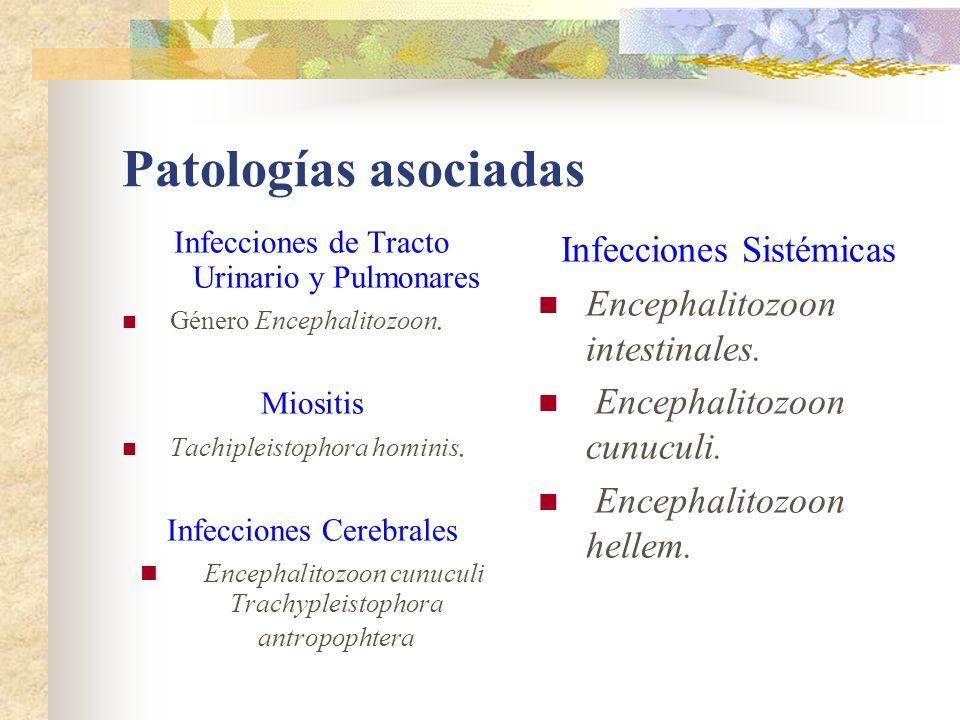 Patologías asociadas Infecciones Sistémicas
