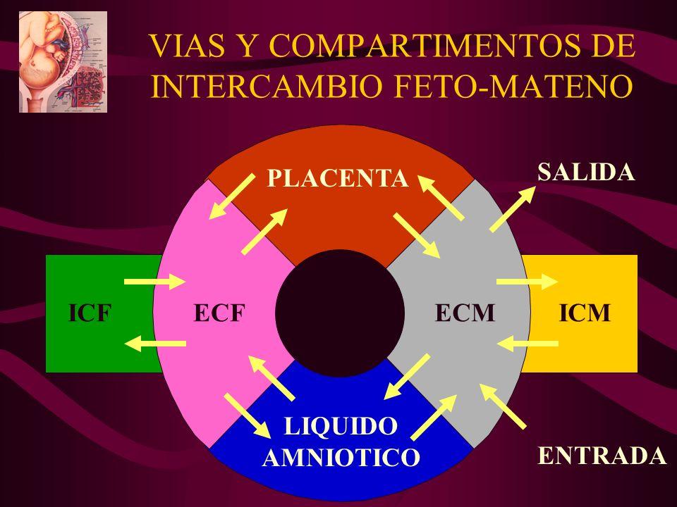 VIAS Y COMPARTIMENTOS DE INTERCAMBIO FETO-MATENO