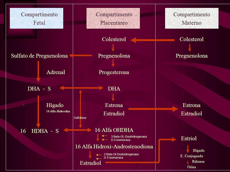 Sulfato de Pregnenolona Adrenal DHA - S