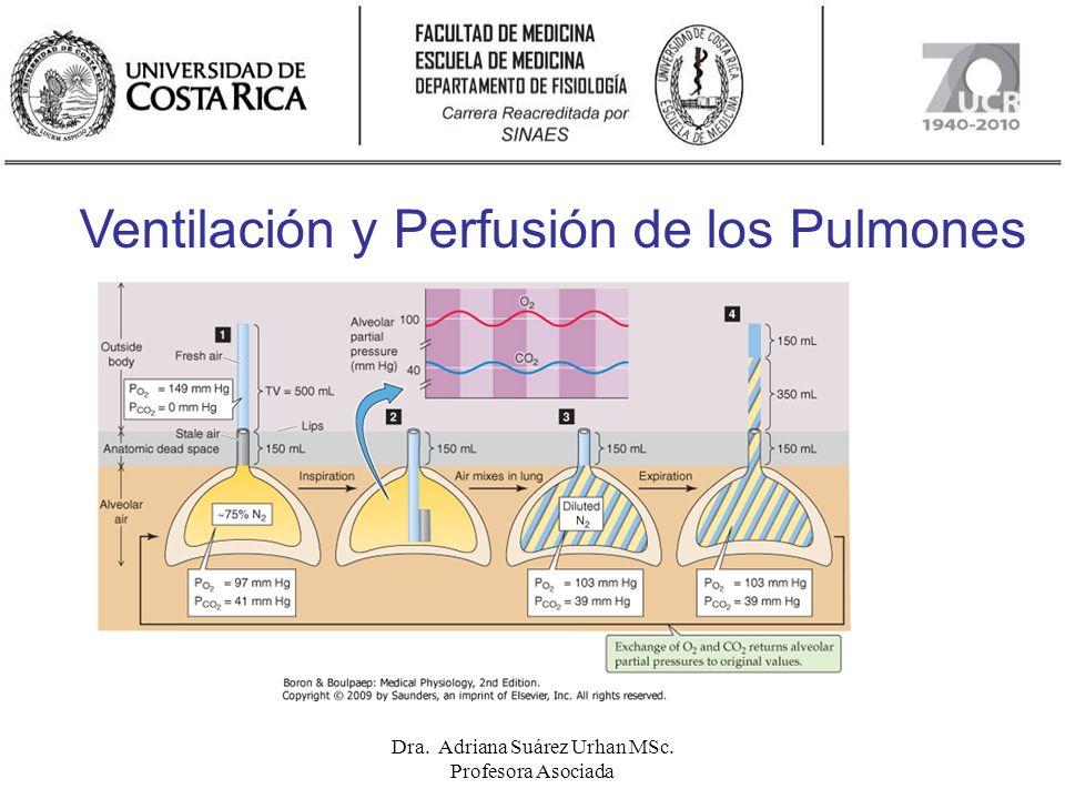 Ventilación y Perfusión de los Pulmones