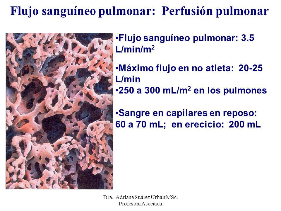 Flujo sanguíneo pulmonar: Perfusión pulmonar
