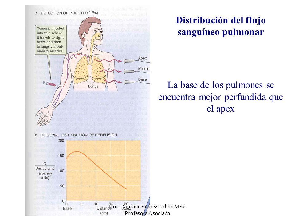 Distribución del flujo sanguíneo pulmonar