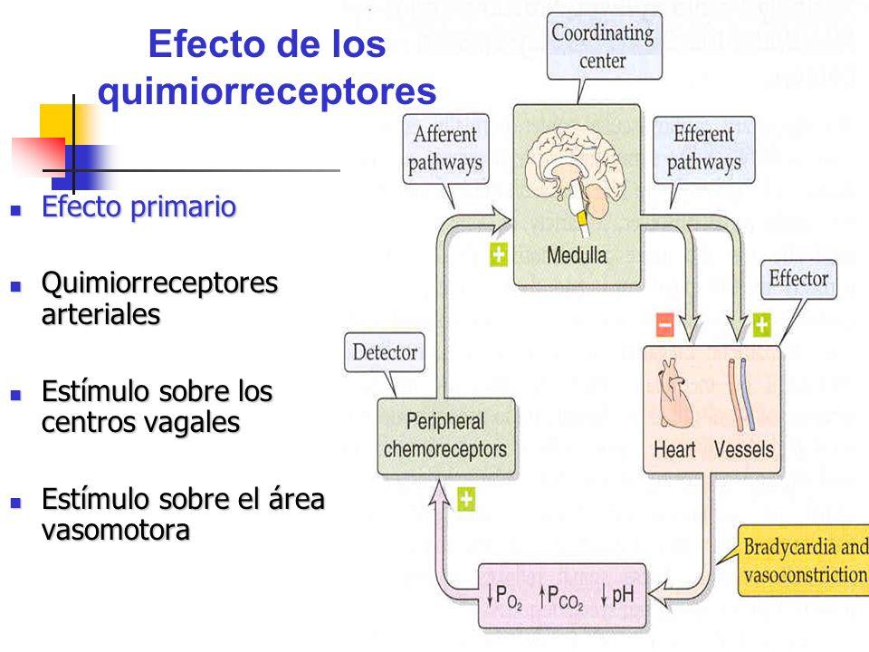 Efecto de los quimiorreceptores