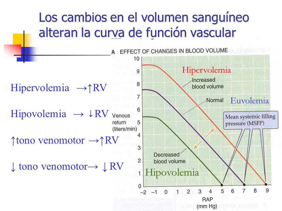 Los cambios en el volumen sanguíneo alteran la curva de función vascular