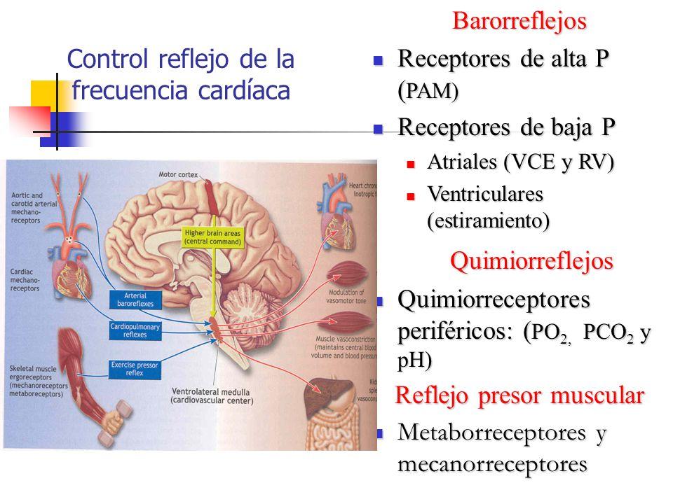 Control reflejo de la frecuencia cardíaca