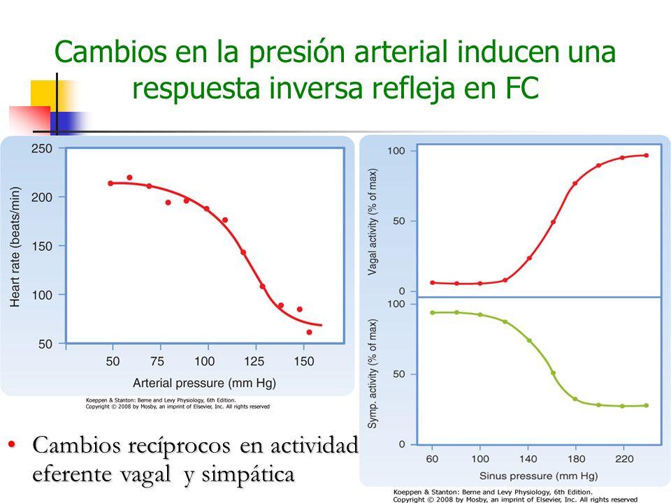 Cambios en la presión arterial inducen una respuesta inversa refleja en FC