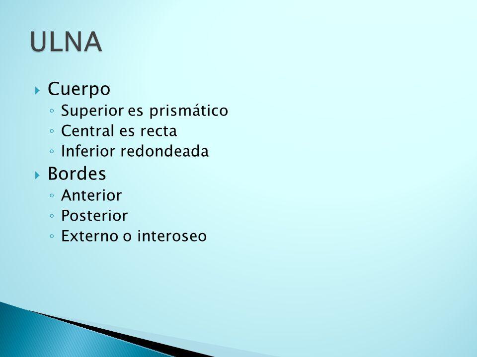 ULNA Cuerpo Bordes Superior es prismático Central es recta