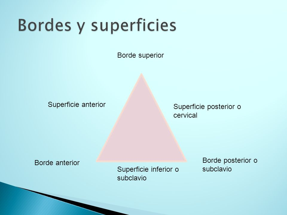Bordes y superficies Borde superior Superficie anterior
