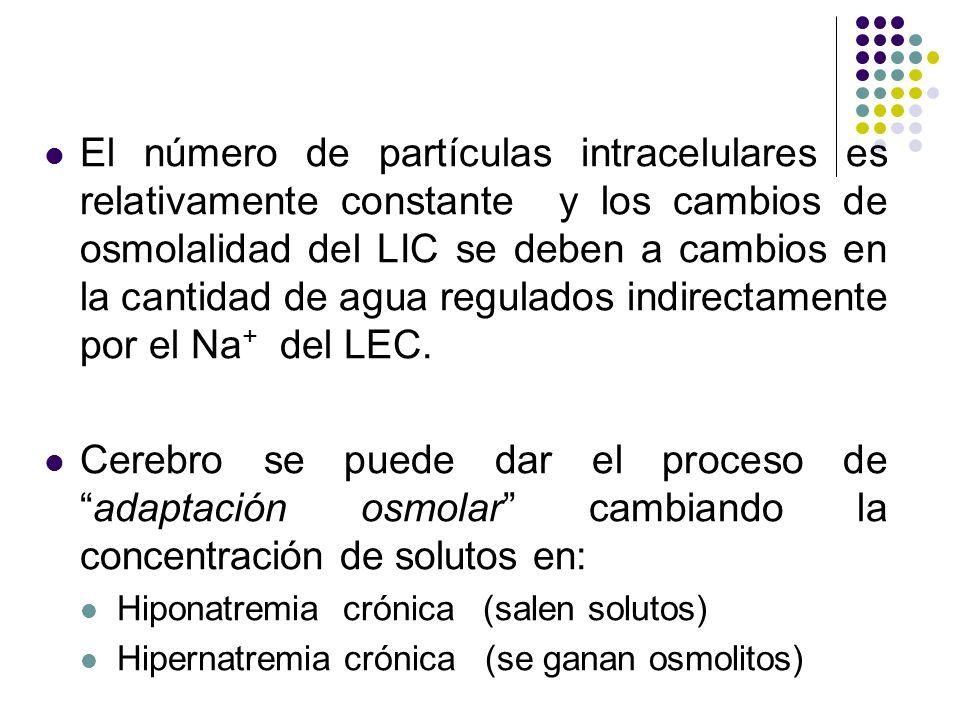 El número de partículas intracelulares es relativamente constante y los cambios de osmolalidad del LIC se deben a cambios en la cantidad de agua regulados indirectamente por el Na+ del LEC.