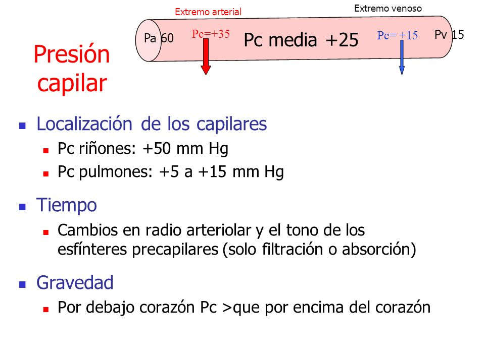 Presión capilar Pc media +25 Localización de los capilares Tiempo