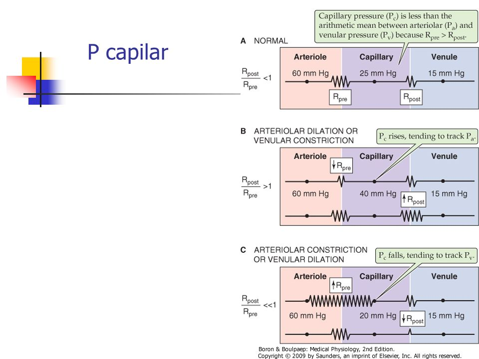 P capilar Berne: Aumento de Pa o Pv aumenta Pc