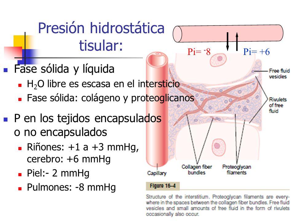 Presión hidrostática tisular: