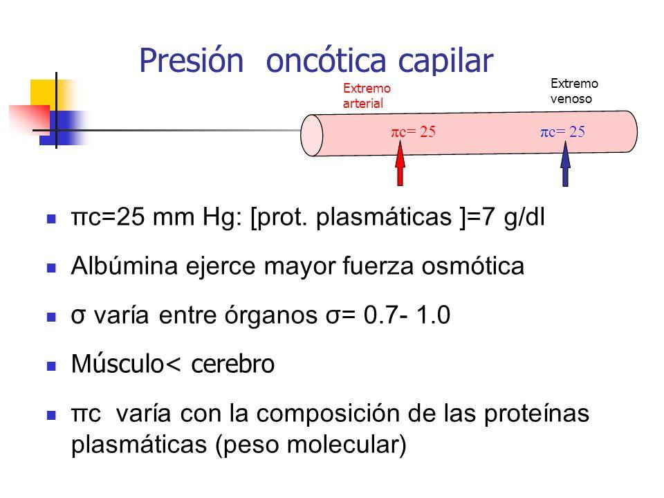Presión oncótica capilar