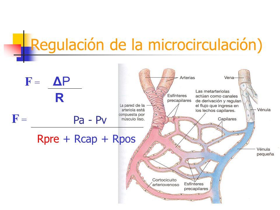 Regulación de la microcirculación)
