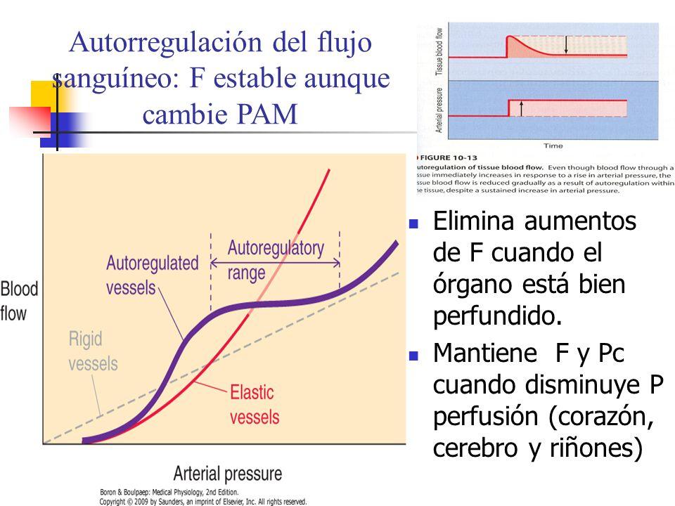 Autorregulación del flujo sanguíneo: F estable aunque cambie PAM