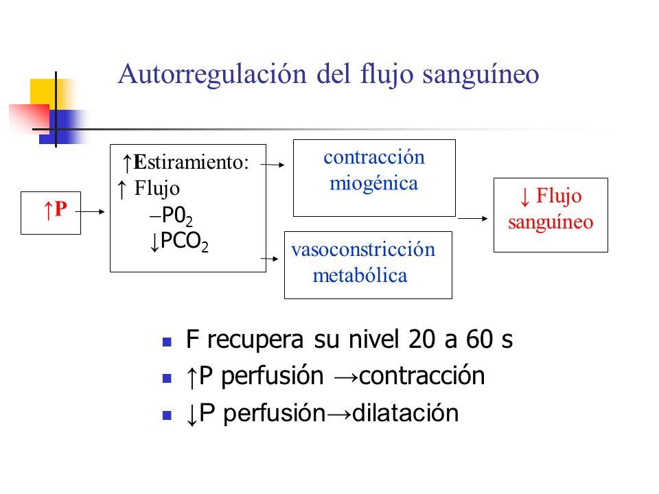 Autorregulación del flujo sanguíneo