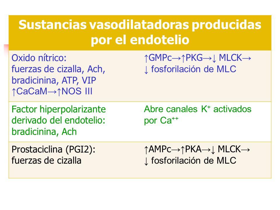 Sustancias vasodilatadoras producidas por el endotelio