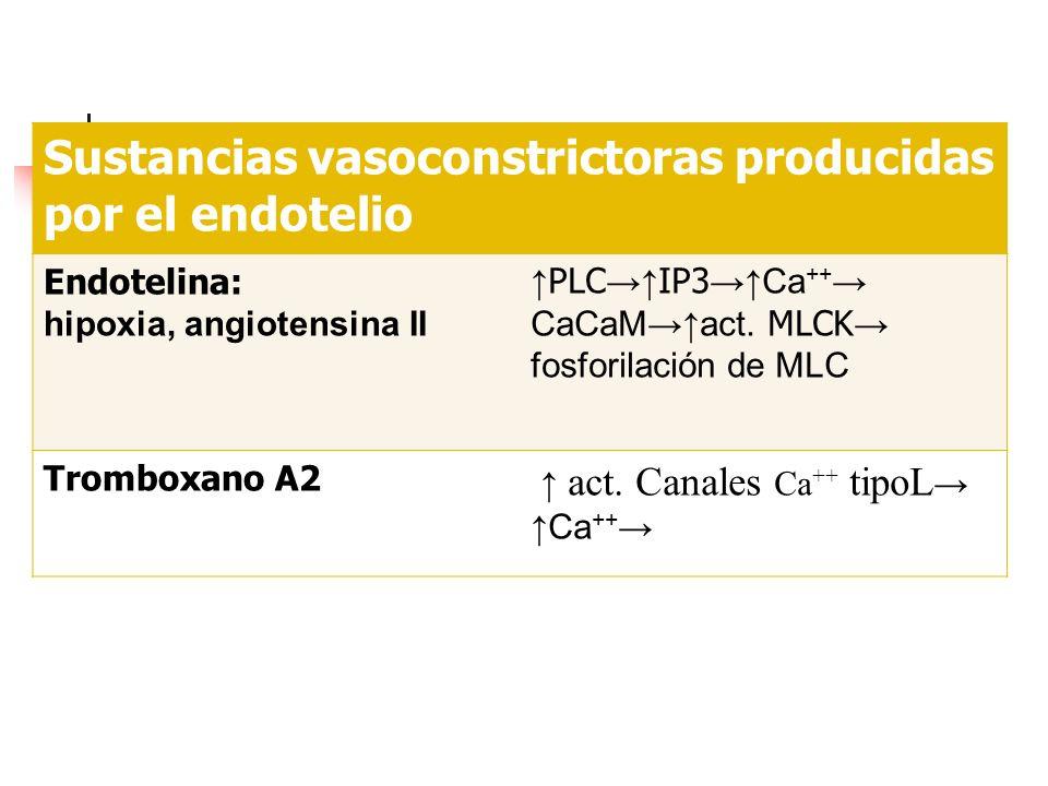 Sustancias vasoconstrictoras producidas por el endotelio