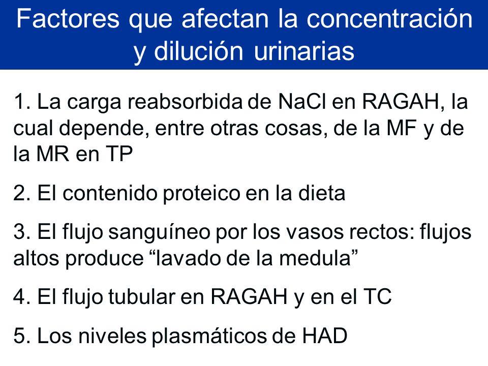 Factores que afectan la concentración y dilución urinarias