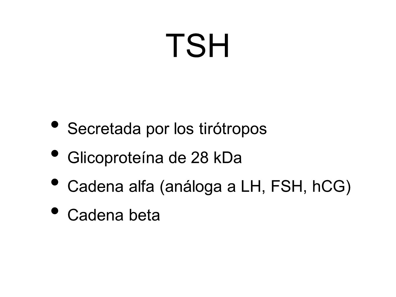 TSH Secretada por los tirótropos Glicoproteína de 28 kDa