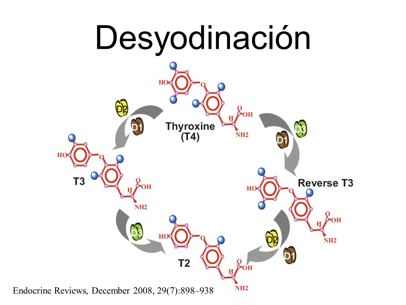 Desyodinación Endocrine Reviews, December 2008, 29(7):898–938